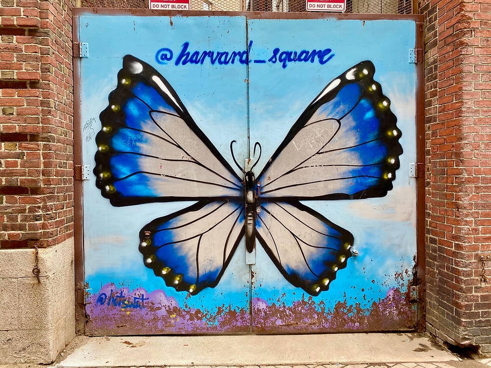 the latest street art near Harvard Square