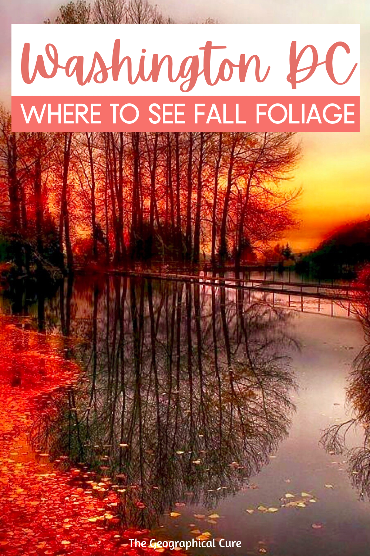 Finding Fall Foliage Near Washington DC
