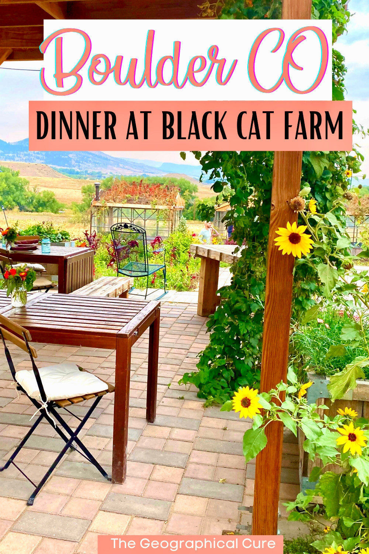 guide to Black Cat Farm, Boulder's best restaurant