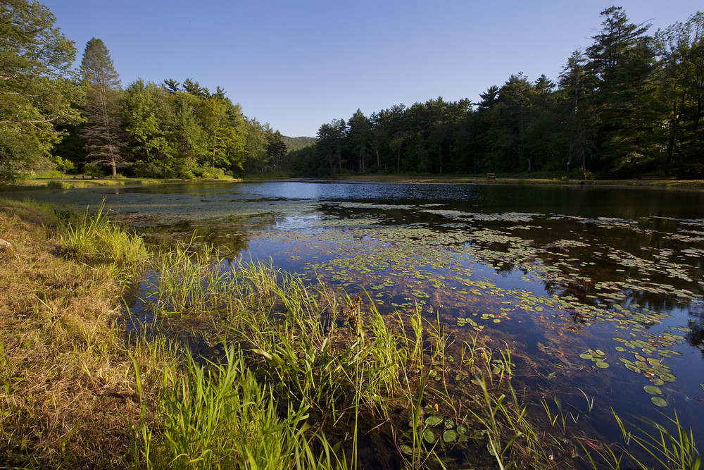 Pond at Wild Acres Park in Pittsfield Massachusetts