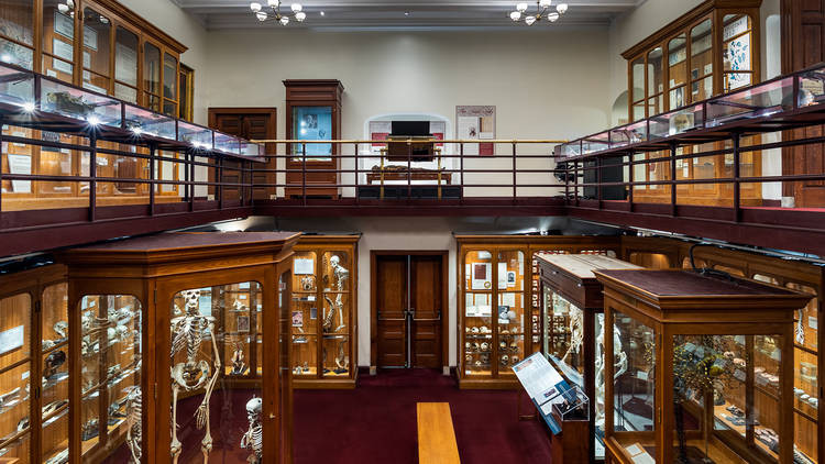 Photograph: Courtesy Mütter Museum