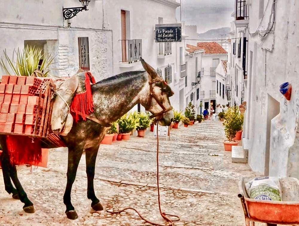 donkey ferrying goods up and down the steep cobbled pathways of Frigiliana Spain