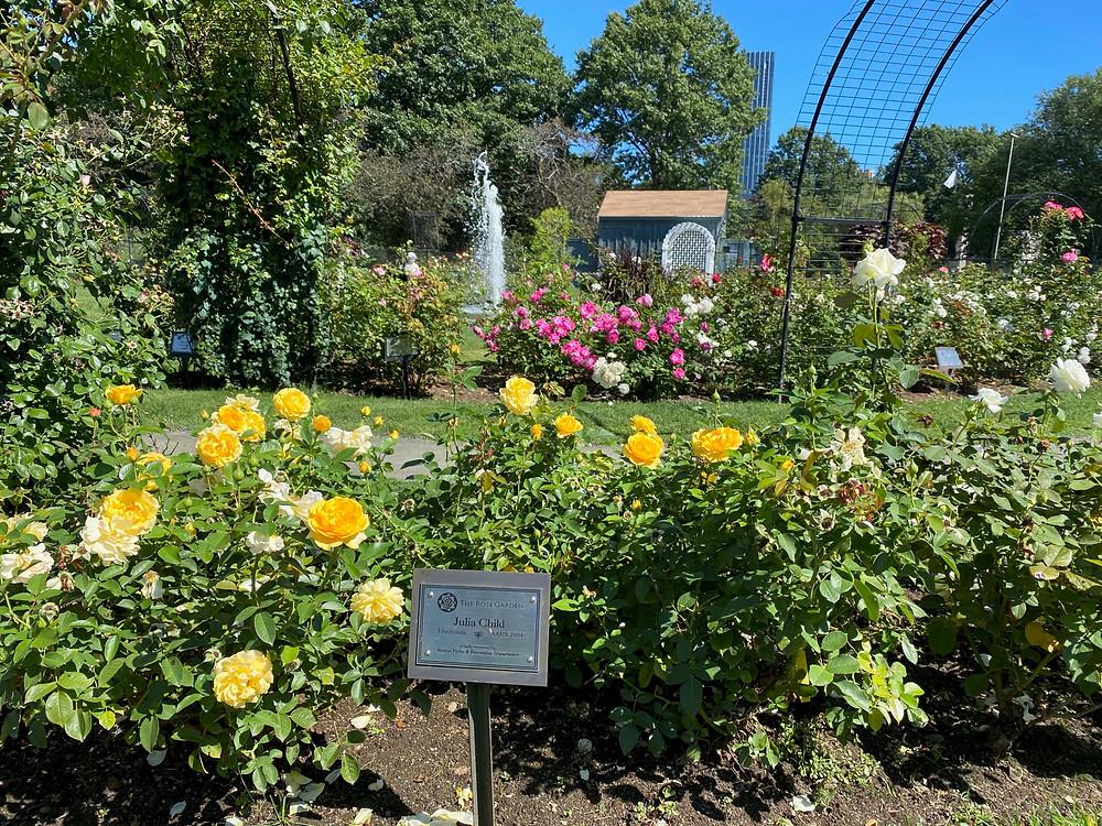 Kelleher Rose Garden in the Back Bay Fens
