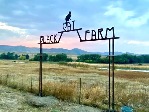 Review Of Black Cat Farm Dinners in Longmont Colorado