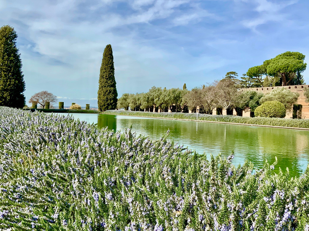 the Poecile of Hadrian's Villa with rosemary blooming in late February