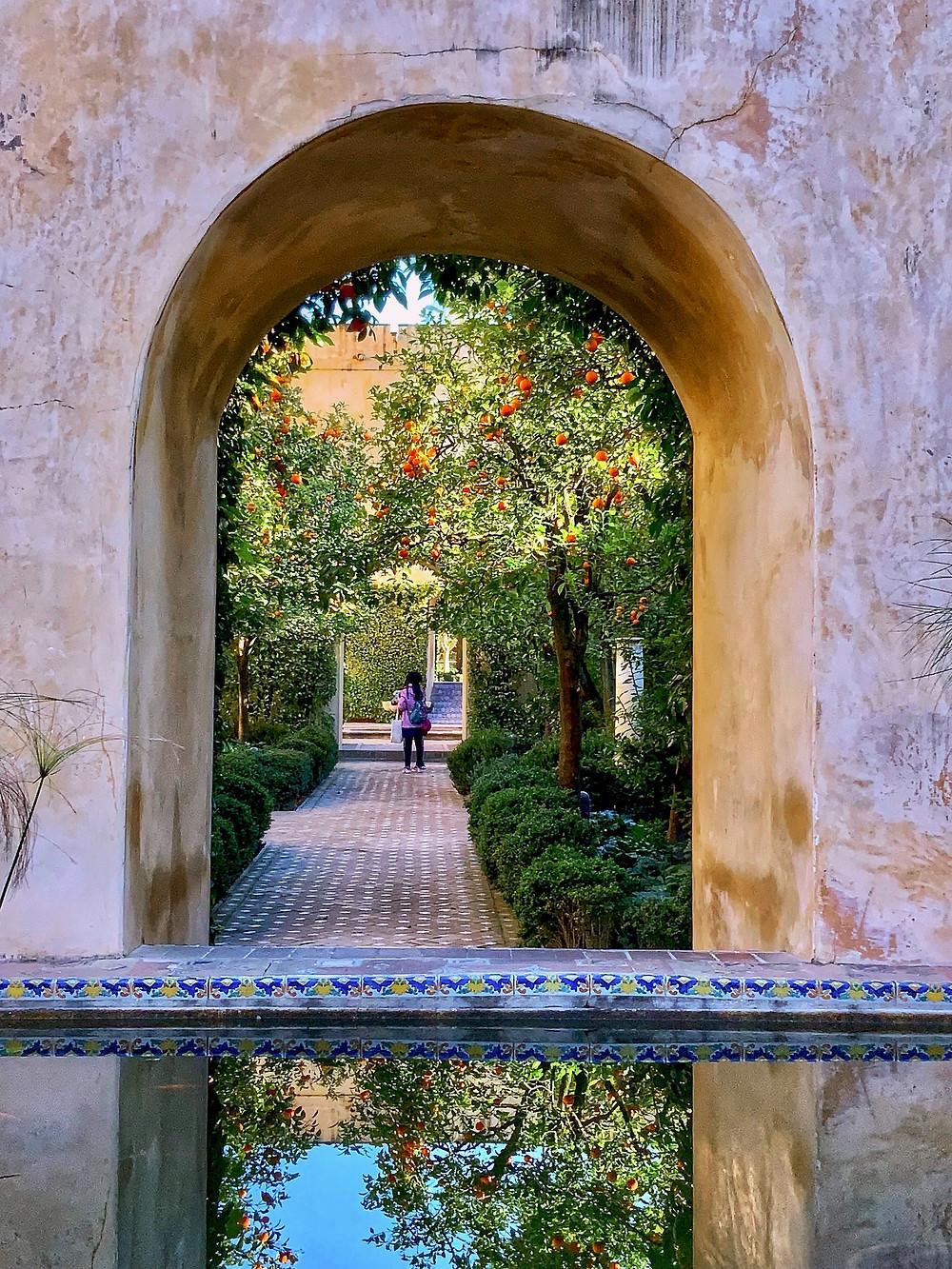 orange trees in the Alcazar Gardens