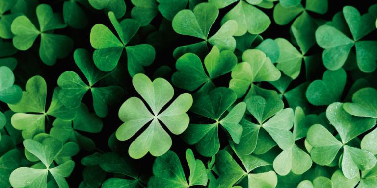 four leaf clovers, a symbol of good luck