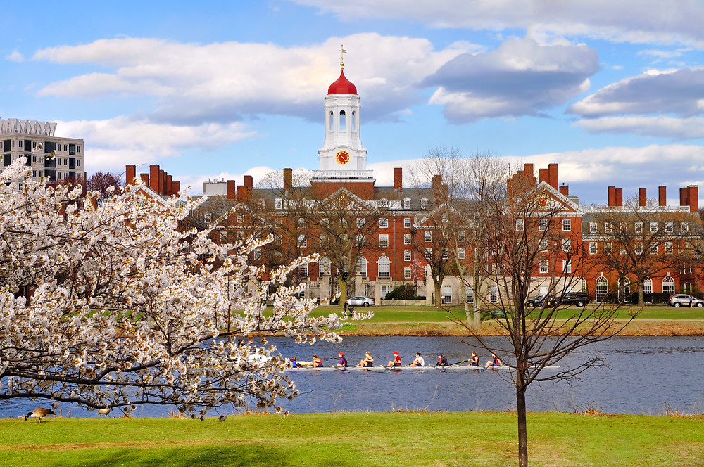 the Harvard campus in spring