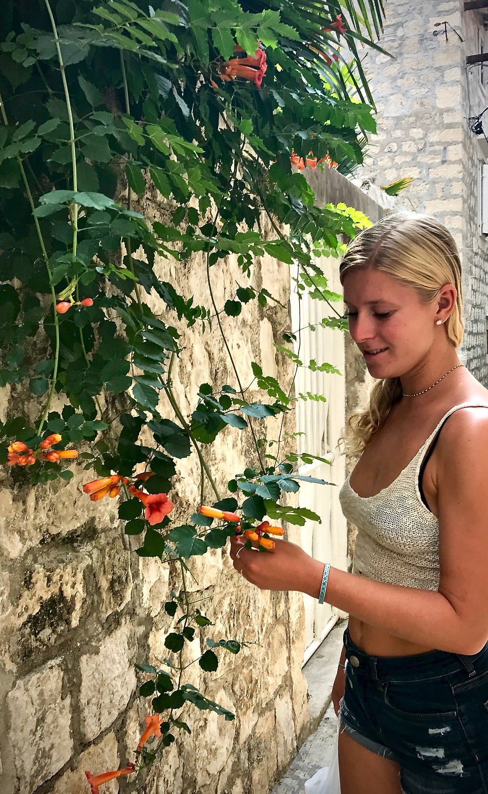my daughter admiring a trumpet vine on the ubiquitous stone walls of Trogir