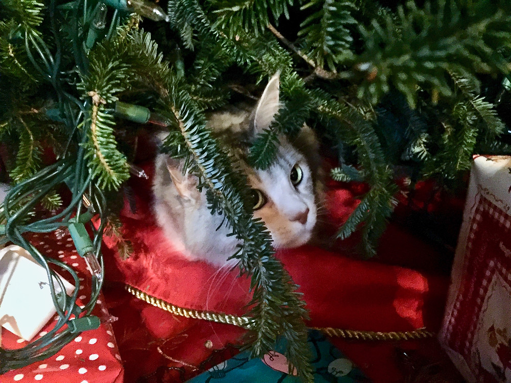 our cat Lily camped under the tree deciding which ornament to smash