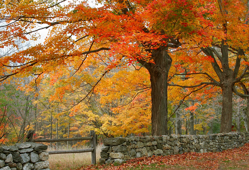 classic fall foliage in New England