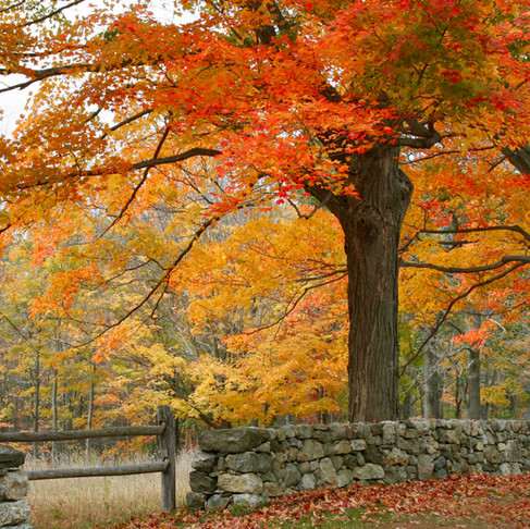 Fall Foliage Road Trip Itinerary for New England