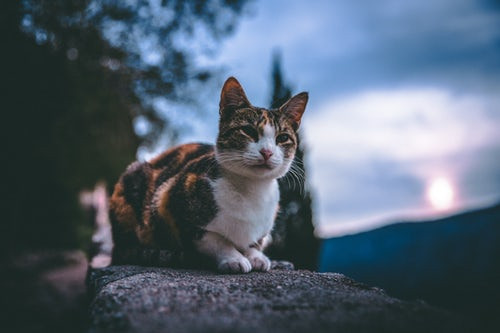 one of the many cats in Kotor Montenegro