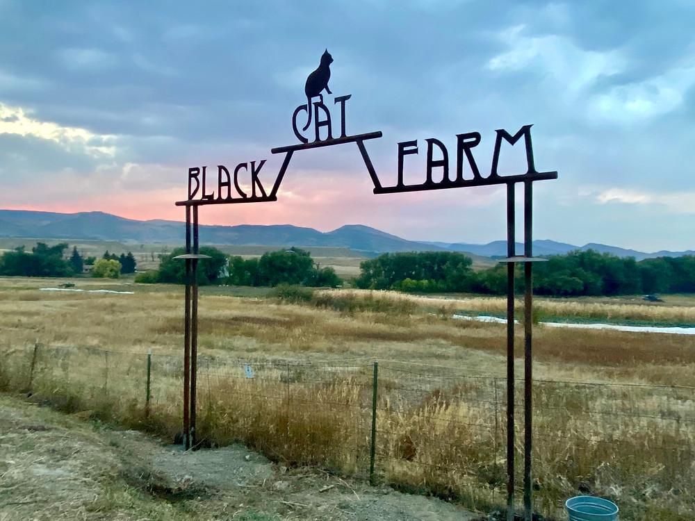 Black Cat Farm