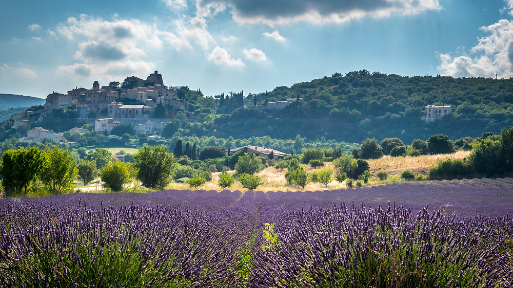 the hilltop village of Menerbes in July when the lavender is blooming