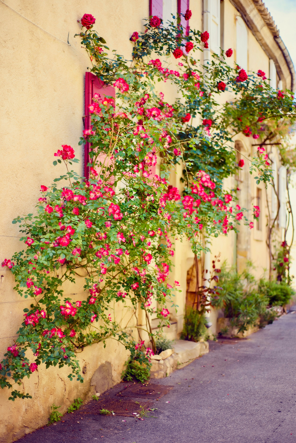 scenic stone medieval street with flowers on wall in Lourmarin