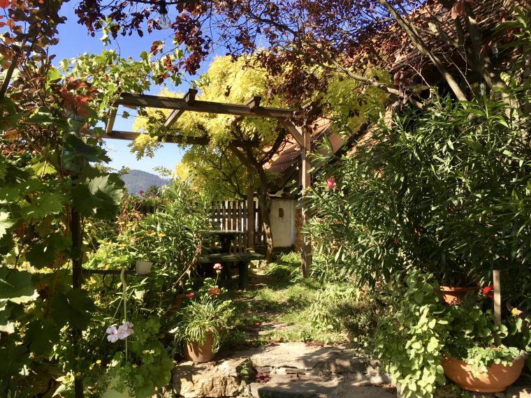 a vineyard in Spitz Austria in the Wachau Valley