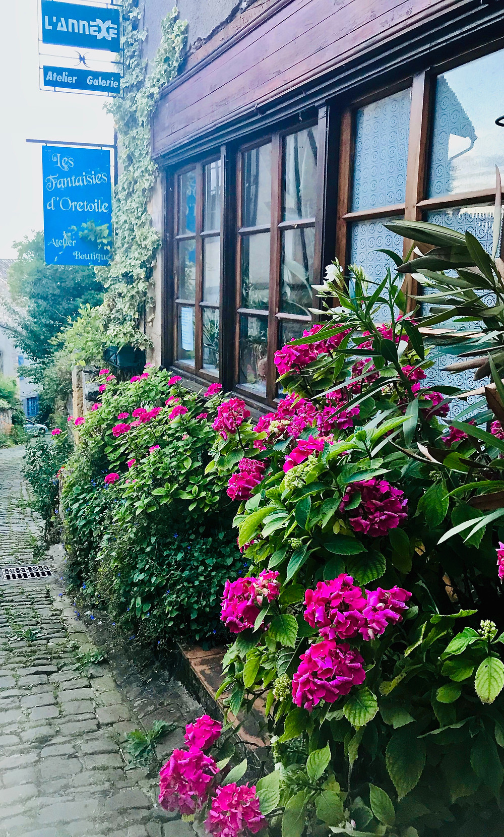 hydrangea bushes outside a restaurant in Cordes Sur Ciel