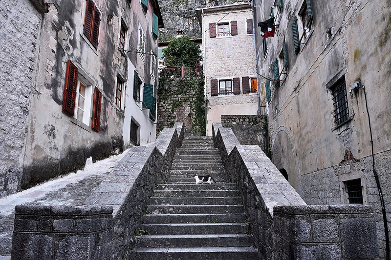 a cat in the town of Kotor Montenegro, a common sight