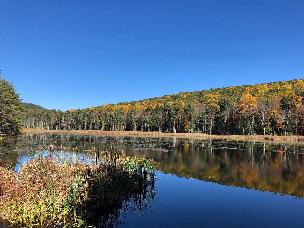fall foliage in Fountain Pond Park in Great Barrington