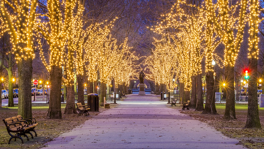 Christmas lights in Boston Common