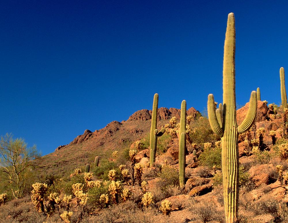 Tucson Desert Botanical Park