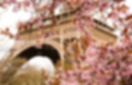 Spring in Paris. Bloomy cherry tree and