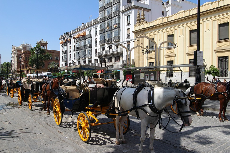poor tired horses lining the streets of Seville