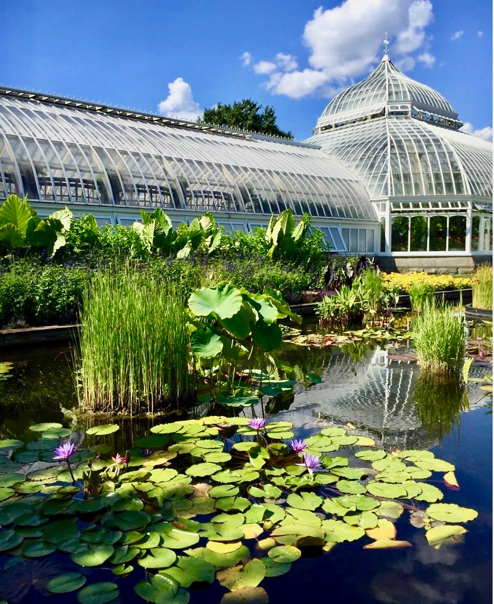 the Aquatic Garden at Phipps