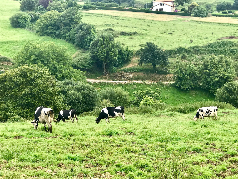 the rolling green Cantabrian countryside
