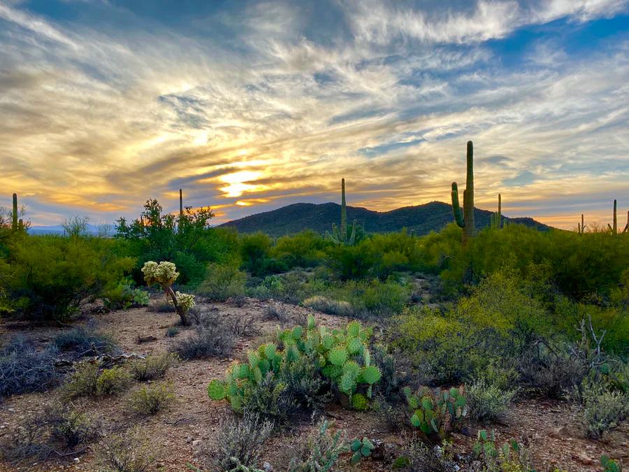 Sunset in Saguaro National Park near Tucson