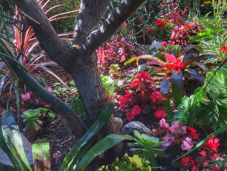 Gardens are All About Coexistence