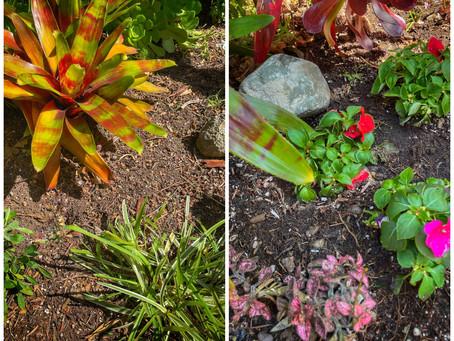 Preparing Your Garden for Spring Planting