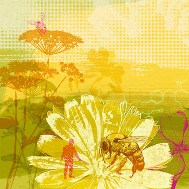 BEES & PESTICIDES