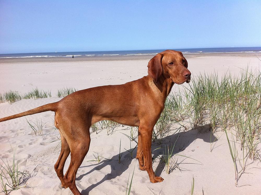 Die besten Tipps für Reisen mit Hund - hier Freilauf am Hundestrand