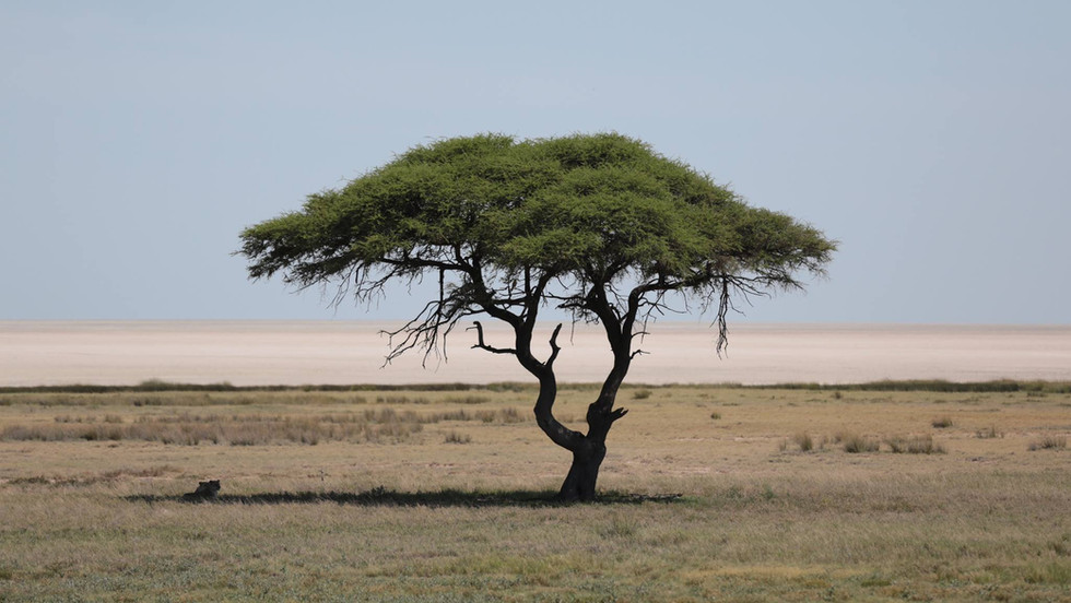 Living With Wildlife - Short Stories From Namibia