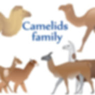 camelids for website.jpg