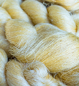 Silk thread is not bleached from Silkwor