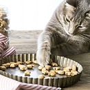 salmon-cat-treats-7-of-10_edited.jpg