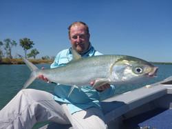 Aurukun Milkfish