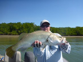 Cape york Barramundi