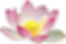 ob_a82507_lotus-flower-hi.png