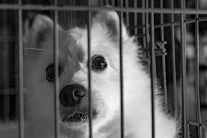How to Deal With Dog Separation Anxiety?