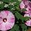 Thumbnail: Flower Calendar