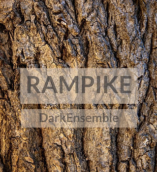 brown-tree-bark-in-close-up-photography-