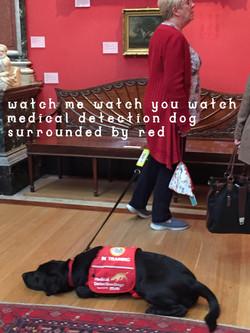 9. watchdog