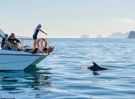 Pelorus Jack, the New Zealand Dolphin