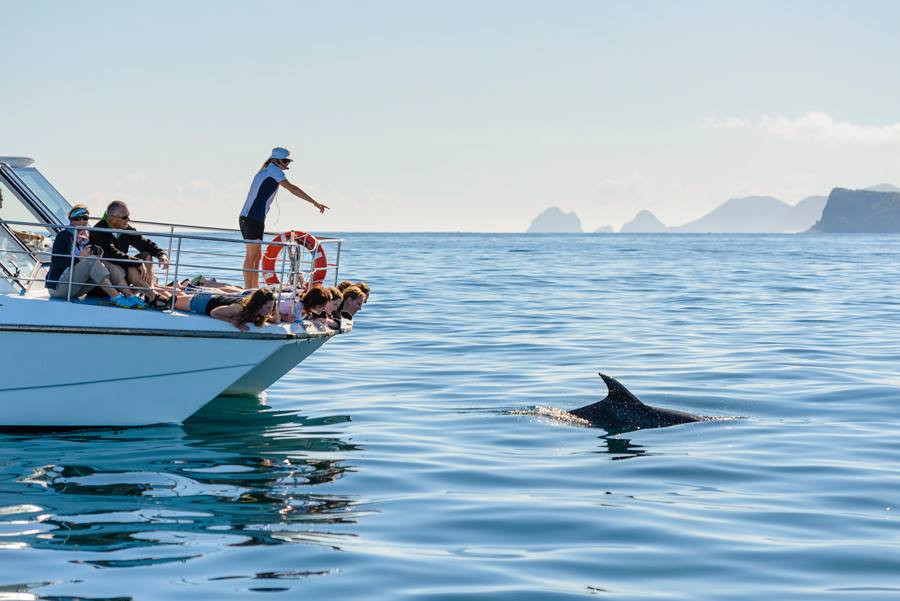 Dolphin, New Zealand travel blog, New Zealand activities