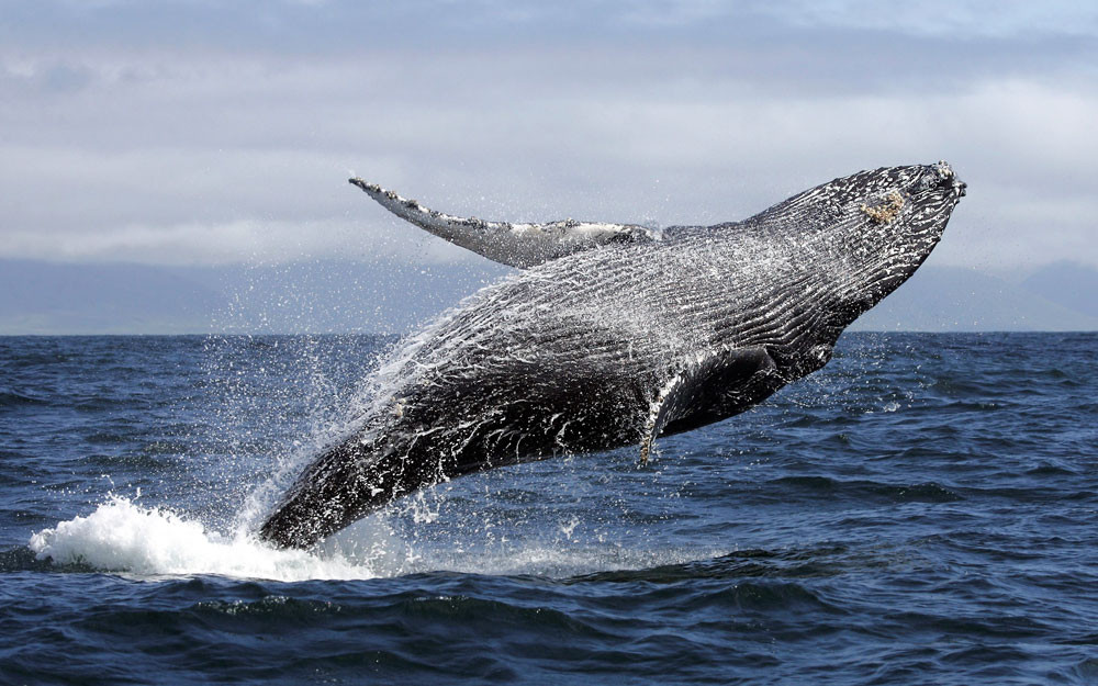 Whale watch tours in Kaikoura, New Zealand tour, New Zealand itinerary