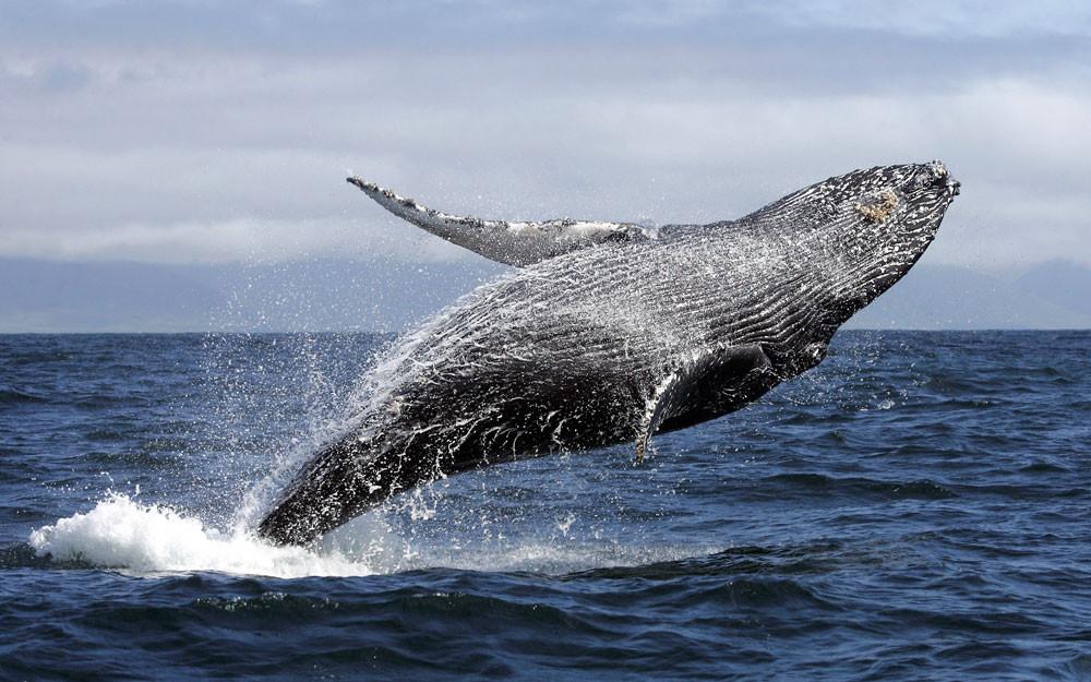 Наблюдение за китами, кит, Новая Зеландия, туры в Новую Зеландию